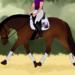 Die Ausbildungsskala - systematische Ausbildung eines Pferdes
